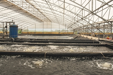 Ứng dụng khoa học trong nuôi trồng thủy sản