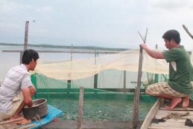 Phát triển kinh tế từ việc nuôi cá lồng trên hồ thủy điện