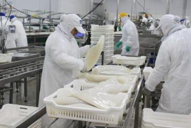 Cơ hội đẩy mạnh xuất khẩu bạch tuộc tươi, sống, đông lạnh từ Việt Nam sang Hàn Quốc